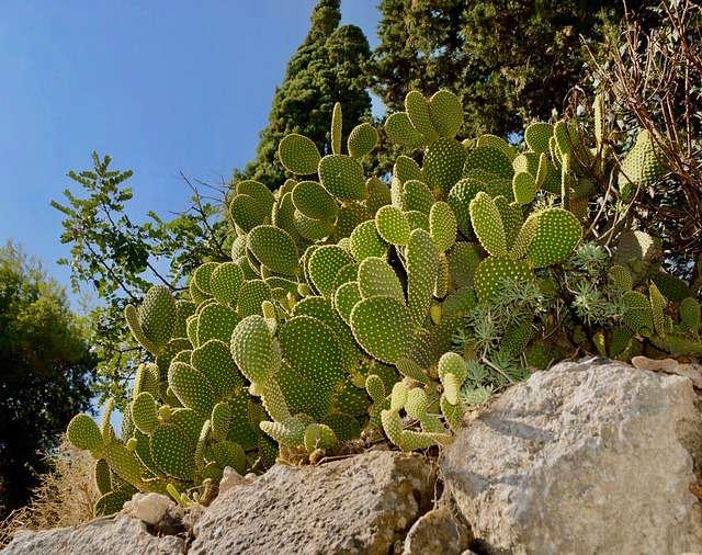 cactus desert mexique
