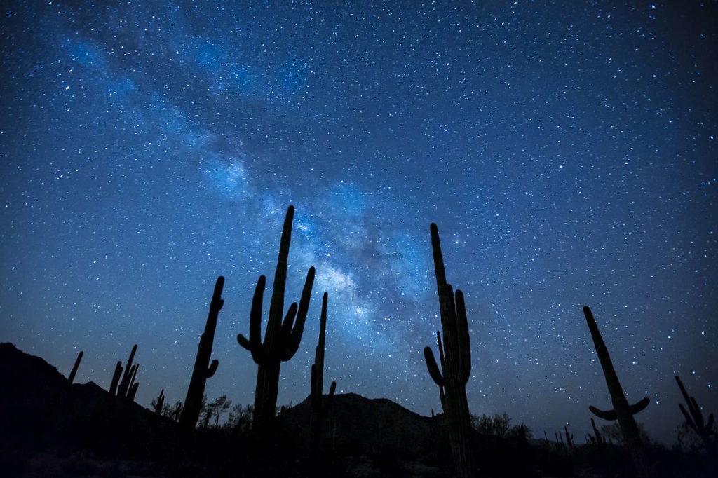catus sous les étoiles