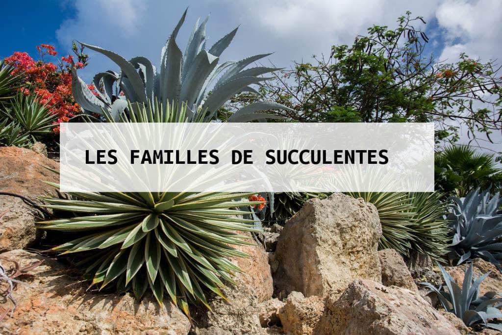 espèces représentatives succulentes_small
