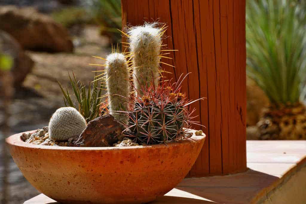 pot pour cactus