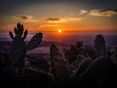 La photosynthèse est un élément déterminant pour vos cactus et succulentes