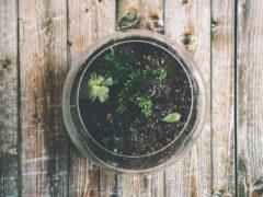 Réaliser un terrarium pour cactus : une fausse bonne idée ?