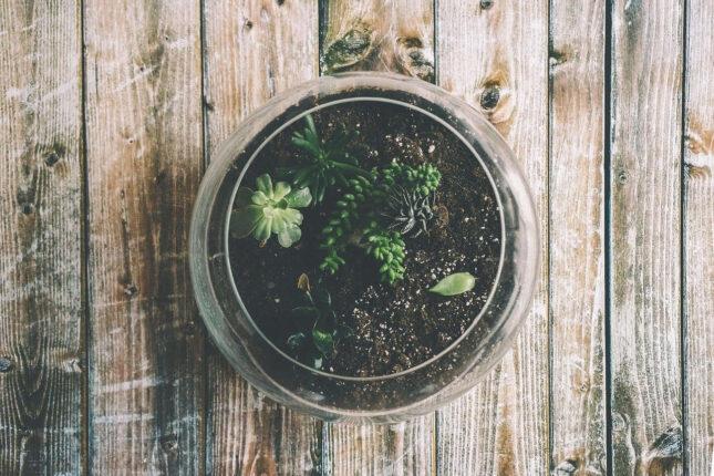 Réaliser un terrarium pour cactus
