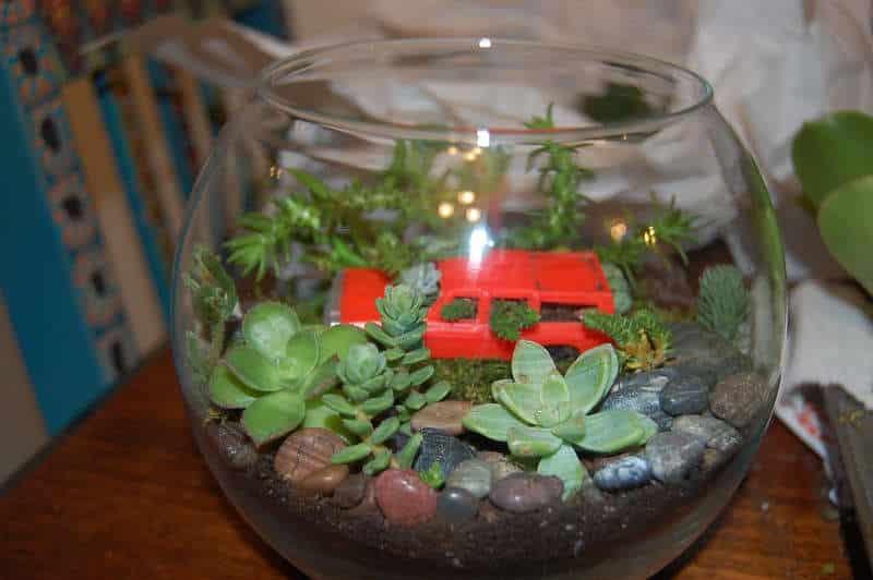 un joli petit terrarium plante succulente et cactus