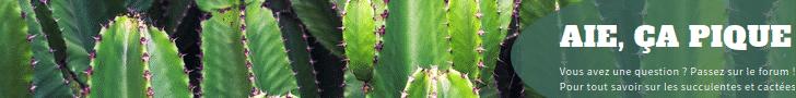 Forum florasuculenta