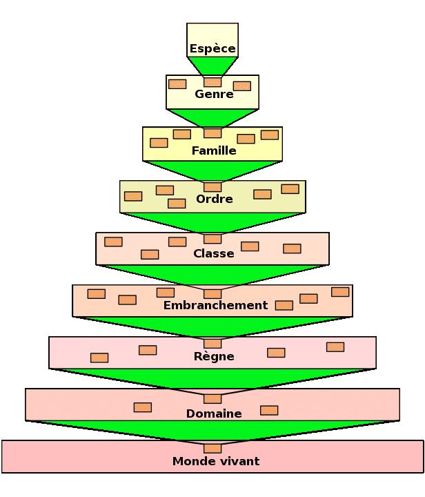 classification_taxonomie
