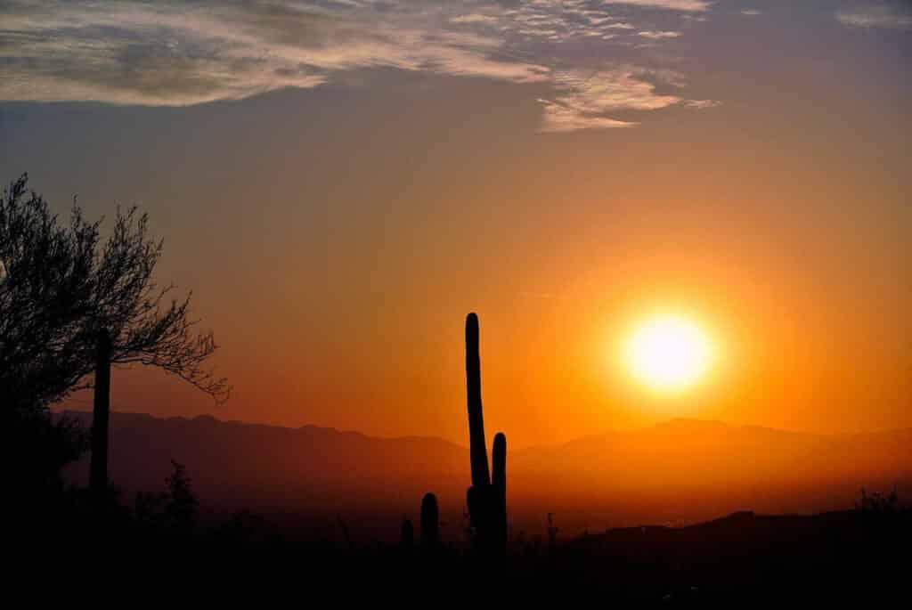 lever se soleil arizona_cactus