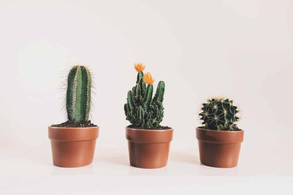 type de cactus