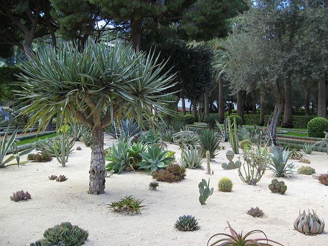jardin sec à la base de cactus et succulentes