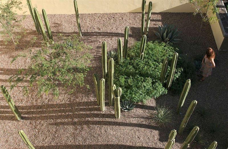 jardin sec et cactus