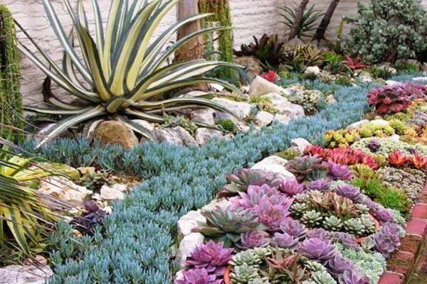 Comment réaliser un jardin sec ?