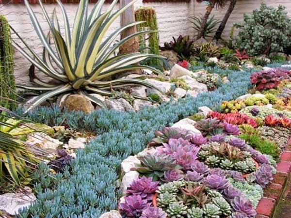jardin sec et succulentes colorées