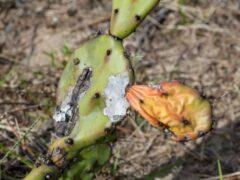 Mon cactus est tout mou : comment le sauver ?