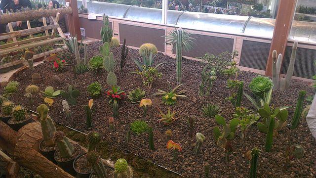 Comment choisir une bonne terre pour cactus et succulentes ?