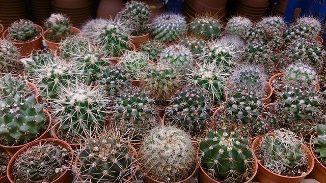 terreau pour succulentes
