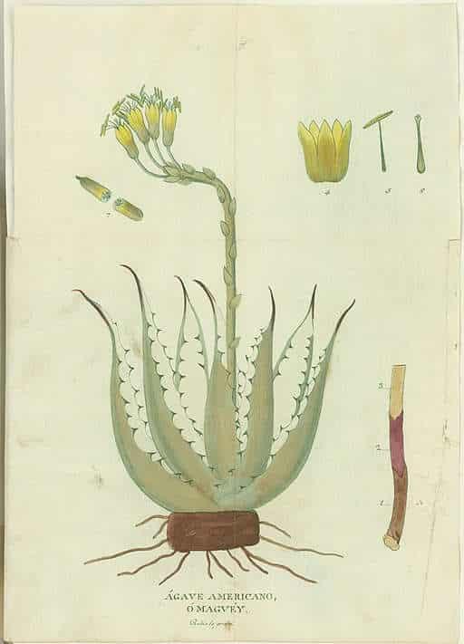 Plantes succulentes : quelles sont les espèces représentatives ?